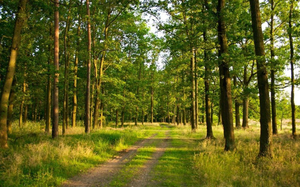 Картинки по запросу ліс